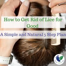 natural lice treatment that will kill
