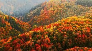 Explainer: The chemistry of autumn | News | Chemistry World