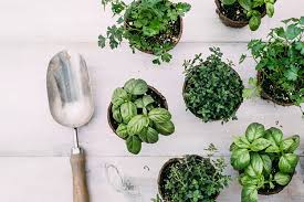 homemade plant food to keep your plants