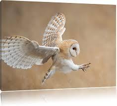 Pixxprint Fliegende Weiße Eule bei der Jagd, Format: 60x40 auf Leinwand:  Amazon.de: Küche & Haushalt