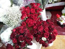 الورد الاحمر يا جماله الصور الفوتوغرافية Mi Community Xiaomi