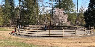 The Benefits Of A Round Pen Your Horse Farm