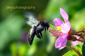 antara akar bunga kupu kupu lebah dan kumbang just another day