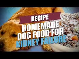 homemade dog food for kidney failure