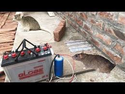 electric mouse trap with battery 12v