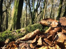 NEW Woodland Toddler Group at the Wenallt, North Cardiff - Cardiff ...