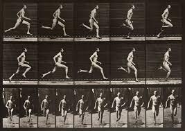 Eadweard Muybridge: Animal Locomotion | International Photography Magazine