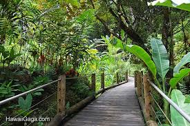 hawaiian tropical botanical garden big