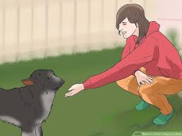 How to fart on your hand and trick your dog to smell it ...