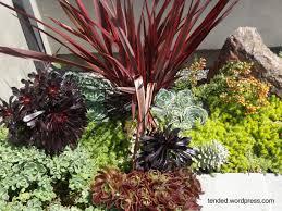 nice succulent garden ideas where to