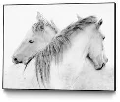 stas horses art block framed canvas