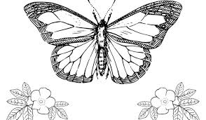 Vlinders Archives Kleurplaten Dierenkleurplaten Dieren