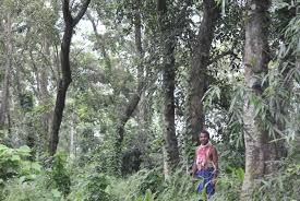 Jadav Payeng: The Man Who Created A Forest In India