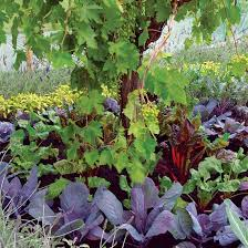 perennial vegetables mother earth news