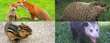 Affordable Wildlife Control: Animal Removal Services, Indianapolis