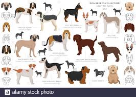 Hunting dogs collection isolated on ...