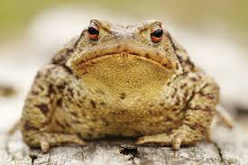 Free toad Images, Pictures, and Royalty-Free Stock Photos - FreeImages.com