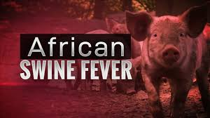 Image result for pigs virus