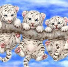 white tiger cubs exotic pets