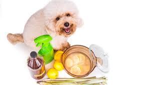 make homemade flea spray for dogs
