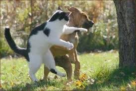 Chó và Mèo - 1365101652194_chomeofight2.jpg