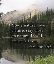 exclusive nature quotes that will remind you beauty bayart