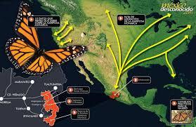 El Santuario de la Mariposa Monarca de Sierra Chincua en México