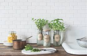 modern sprout self watering herb kit