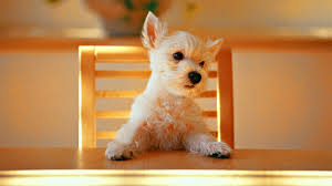50 free hd dog wallpapers