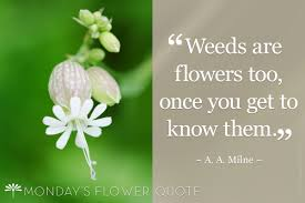 flower quote weeds are flowers too floating petals flower photography