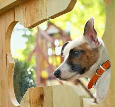 Diy Bone Shaped Fence Window Petdiys Com