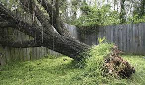 Damage To Your Fence From A Fallen Tree Allstate