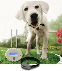 Amazon Com Havahart Wireless Radial Shaped Dog Fence System Havahart Wireless Wireless Pet Fence Products Pet Supplies