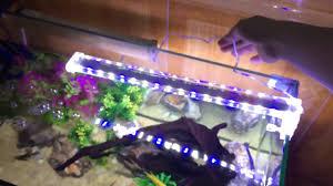 Phụ kiện bể cá cảnh, Máy lọc nước bể cá cảnh và Đèn LED kẹp bể cá CAO CẤP  GIẢM GIÁ - YouTube
