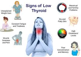 low thyroid and weight gain dr lipman