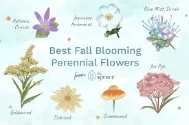 top 14 fall blooming flowers for a
