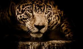 jaguar wallpapers top free jaguar