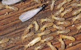 Get Average Cost Of Termite Inspection  PNG