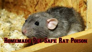 pet safe rat poison that will kill rats