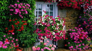 garden flowers can you grow in serbia