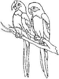 Tekening Patroon Dieren Drawing Template Animals Papegaaien