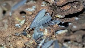 14+ Do Termites Fly At Night Images