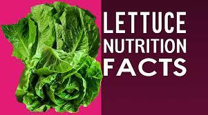 lettuce romaine iceberg lettuce