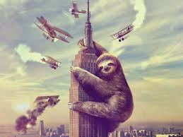 sloth wallpaper on hipwallpaper