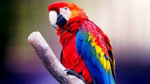 macaw parrot wallpapers on wallpaperplay