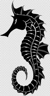 Seahorse Seahorse Png Klipartz