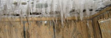 ceiling mold growth learn the cause