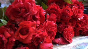 صور ورود طبيعيه اجمل الزهور بالوان رائعة معنى الحب
