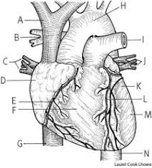 heart dictionary definition heart defined