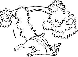 Vliegende Eekhoorn Vanuit De Boom Kleurplaat Gratis Kleurplaten